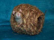 Travní domeček - koule