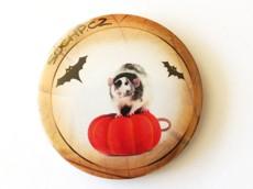 Placka: Potkan podzimní