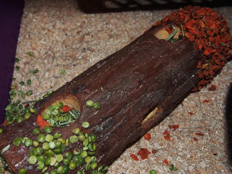 Dřevěný tunel s bylinkami, mrkví a hráškem střední
