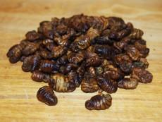 Sušené kukly bource morušového 50 g