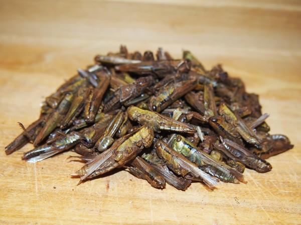 Sušené kobylky 20 g