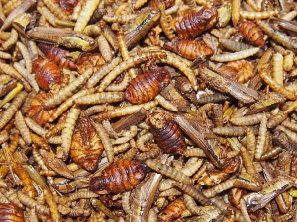 Směs sušeného hmyzu 20 / 50 / 100 / 250 g