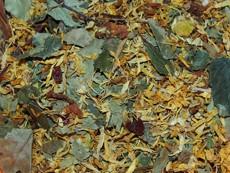 Jarní salát s listy břízy a měsíčkem 60 g